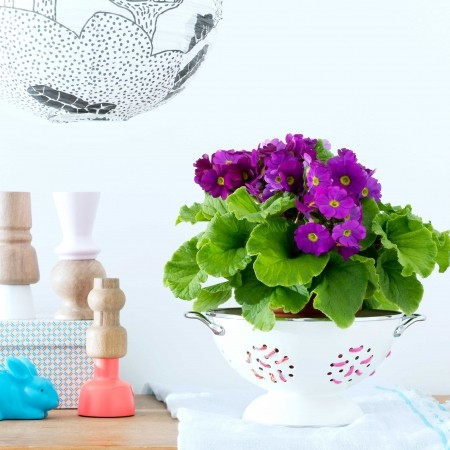 Decorating With Flowers House Plants Red Online