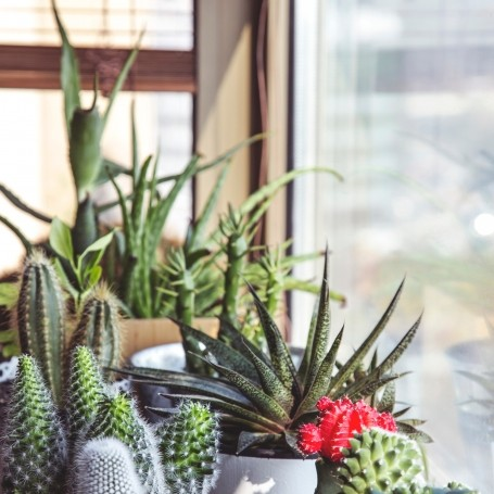 Making your home beautiful with plants: the beginner's guide