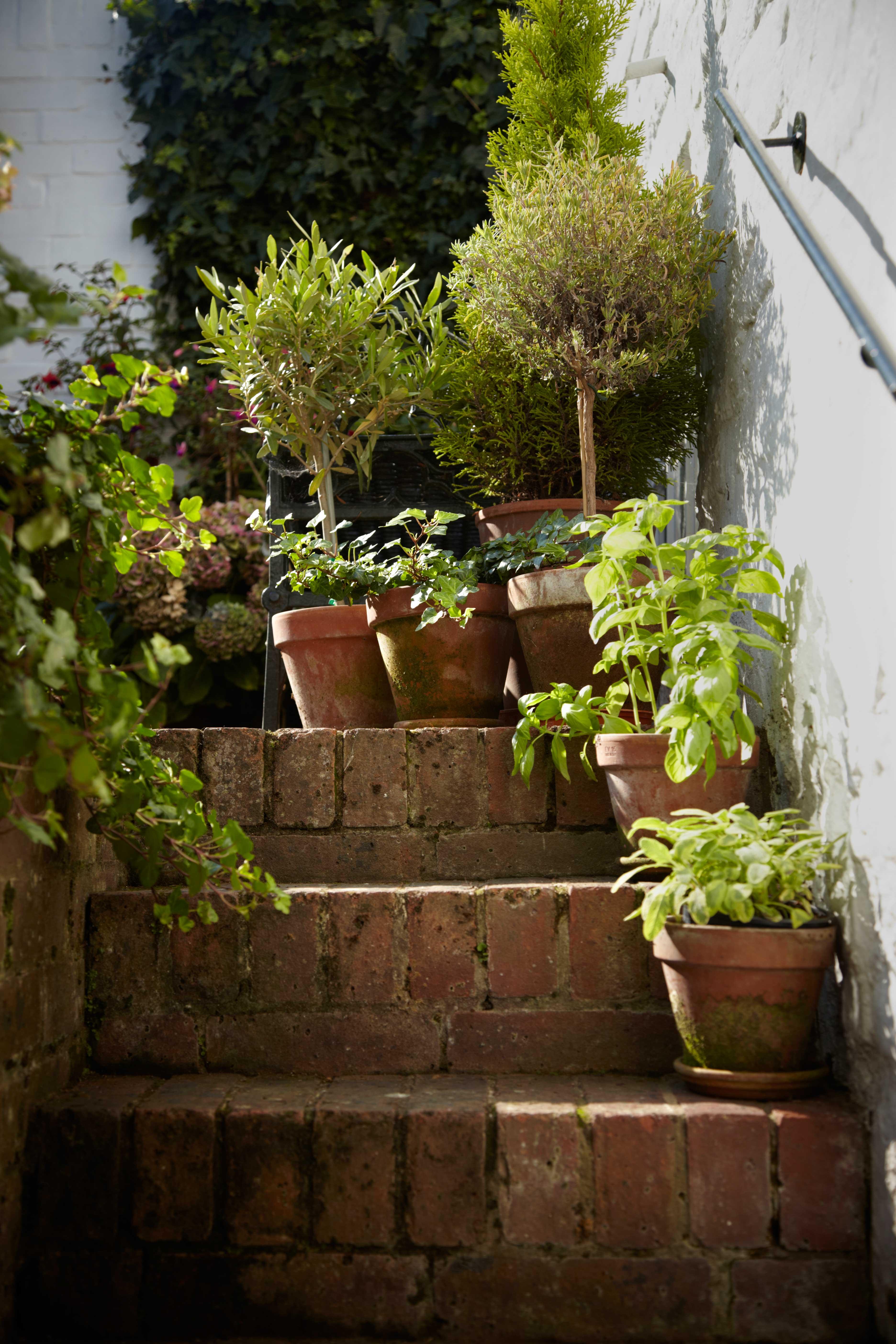 First Time Gardener Garden Designs