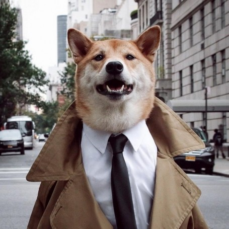 The most stylish dogs of Instagram
