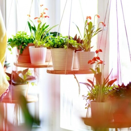How houseplants can help you achieve mindfulness