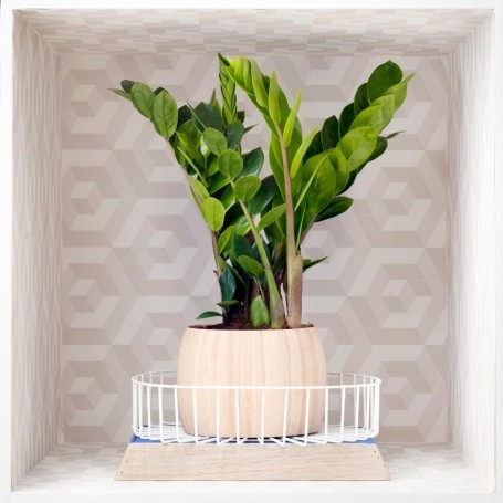 Video: How to make 3 stylish houseplant holders
