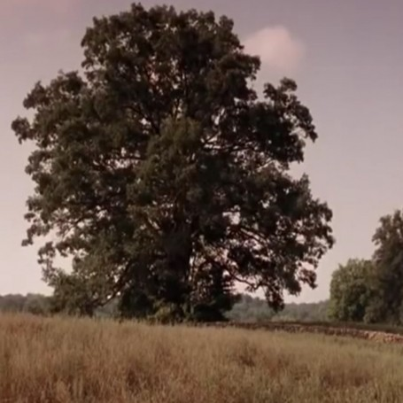 The Shawshank Redemption tree has fallen down
