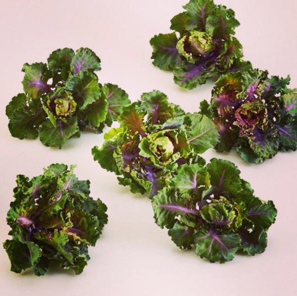 There S A Kale And Brussels Sprout Hybrid You Need To Try