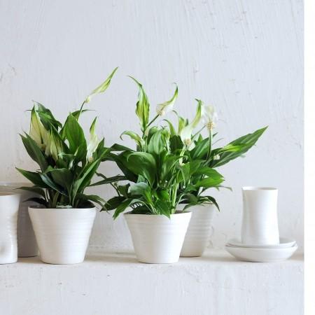 Joy of plants