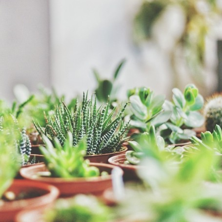 5 health benefits of having succulents in your home