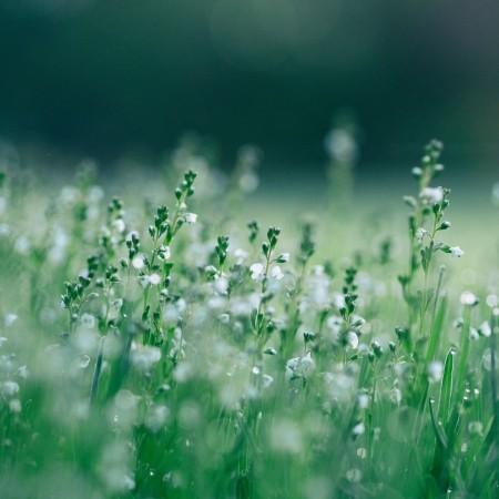 Hay fever remedies - Photo by Aaron Burden on Unsplash