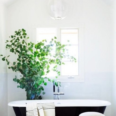 This is why you should be keeping plants in your bathroom