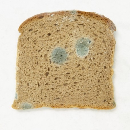 Have you ever picked mould off bread and then eaten it?