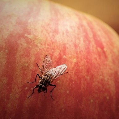 The gross thing that happens when a fly lands on your food