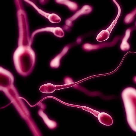 Men's sperm counts have fallen dramatically in the last 40 years