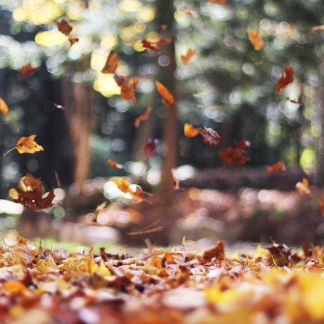 7 ways to look after your health this autumn