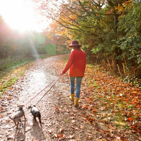 Walking is one of the best exercises for your body, a Harvard doctor reveals