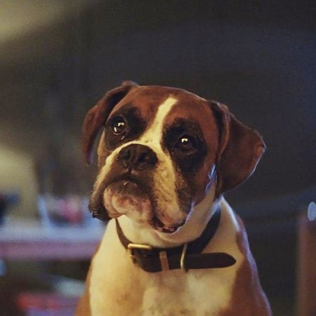 This is when the John Lewis Christmas advert will be released