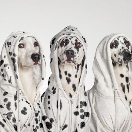 You can now wear matching pyjamas with your dog
