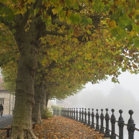 Line streets with trees to reduce number of asthma attacks, experts say