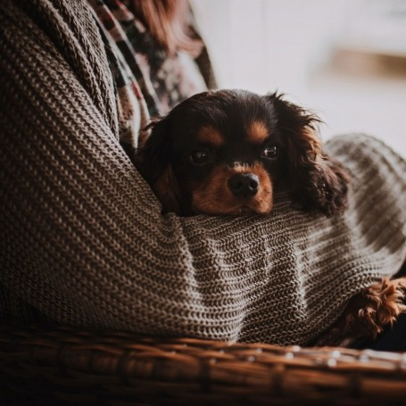 Your dog is better at reading your mood than you are at understanding theirs