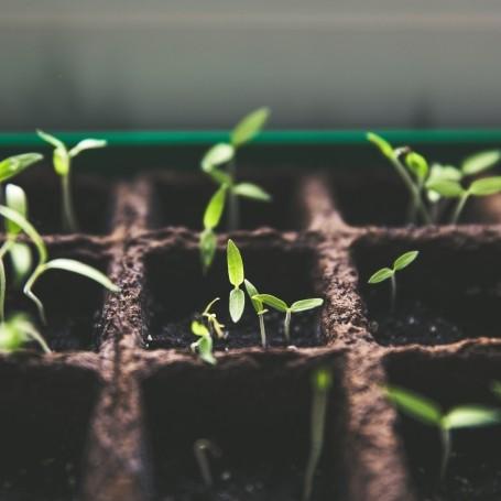 5 reasons to take up gardening this year