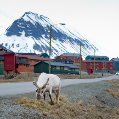 There's a remote Norwegian town where you're not allowed to die